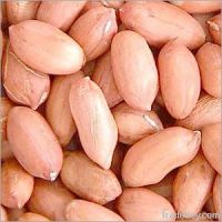 High Quality kenyan Dried New Crop Peanuts Kernel Without Shell