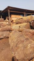 African Timber wood logs at customization sizes