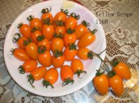 Grape Tomato Seeds