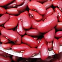 Quality Black Beans