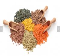 Red Split Lentils /  Red Lentils / Yellow Lentils / Green Lentils For sale