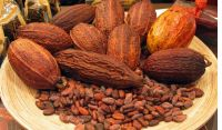 High Quality Dried Raw Natural Cocoa Beans