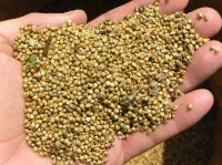 Best Quality  GREEN / YELLOW MILLETS