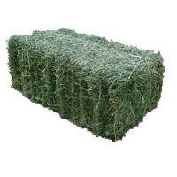High Quality  Lucerne Hay