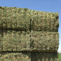 High Quality  Oat Hay