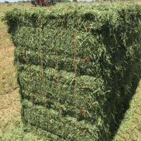 High Quality Eragrostis Bale