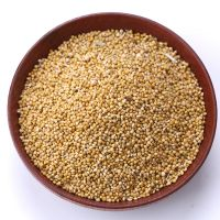 Green Millet /Best quality/ competitive price/Fast delivery time