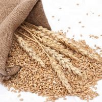 Milling wheat/Best quality/ competitive price