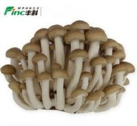 bottle for mushroom growing brown
