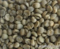 green Arabica coffee beans washed processed