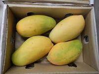 Fresh Fruit ( Mango, Orange)