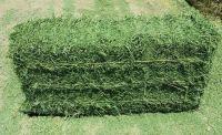 Premium Quality Alfalfa