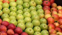 Bulk Fresh Fruits Apples