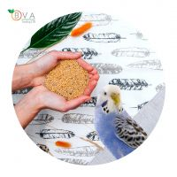 Ukrainian Best Selling Pigeon Feed, Decorative Bird Feed, Raw Materials