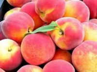 Fresh Class 1 Peach, Fresh Peach from South Africa