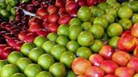 Fresh Class 1 Red Delicious Apples,Fuji Apples,Royal Gala Apples and Granny Smith Apples