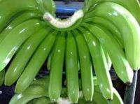 Fresh Green Cavendish Bananas from South Africa