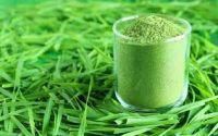 100% Organic Wheat grass powder,Wheat Grass powder