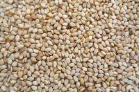 Wholesales Raw White Hulled Sesame seeds Black Sesame seeds