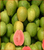 Premium quality Fresh Guava for sale