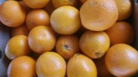 Sweet Fresh mandarin orange/Fresh Orange,Naval Orange,Valencia Oranges