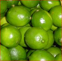 Organic Bulk Limes, Fresh Lime