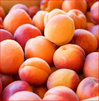 Fresh Apricots , Wholesale Fresh Apricots , Bulk Fresh Apricots
