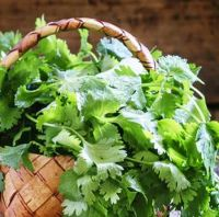 Fresh Coriander Leaves For Sale