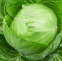 Fresh Cabbage For Sale
