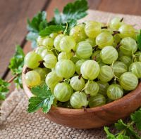 Indian Gooseberry For Sale