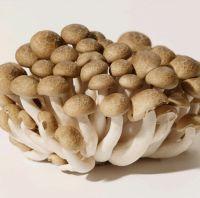 Shimeji Mushroom for sale