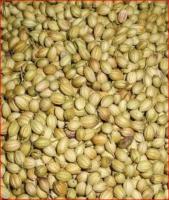 Coriander seeds and  Split Coriander seeds