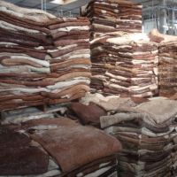 Wet Salted & Dry salted Donkey Hides and Cow Hides, cattle Hides, animal skin, Goats, Horses, Fur