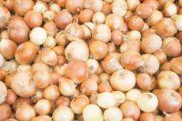 Onion, red onion, white onion, yellow onion