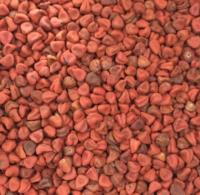 Annatto seed anntto seed, spice, achute