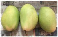 Fresh Philippine Carabao Mangoes