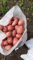 White & Red Potatoes