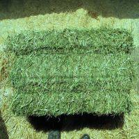 Alfalfa hay and Timothy hay