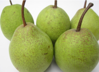 The supplier of chinese fresh snow pear