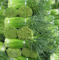 young garlic shoot &fresh vegetable supplier from china