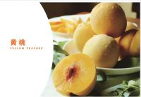 The Chinese yellow peach and fresh peach supplier for export