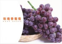the Chinese rose grape fresh fruit of supplier
