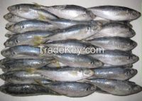 Mackerel Fish, Bonito Fish, Tuna Fish, Tilapia Fish, Frozen Shrimps, Squids, Crabs