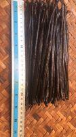 Planifolia Vanilla Beans