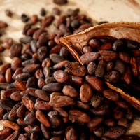 hight quality cocoa Beans