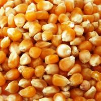 Big Grains Yellow maize