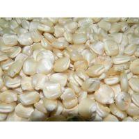 Best Grade White Corn Maize For Animal Feed White Maize Corn