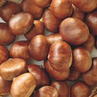 100% Natural Chest Nuts