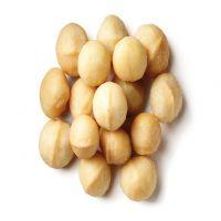 Australian Macadamia Nuts