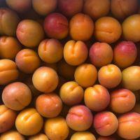 Fresh Apricots SA origin apricots
